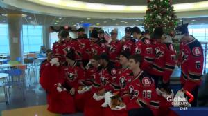 Calgary Hitmen deliver teddy bears to Alberta Children's Hospital