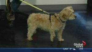 Edmonton Humane Society