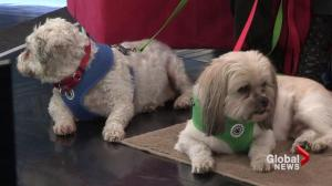 Adopt a Pet: Shilo and Pepper