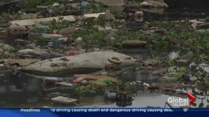 U of C expert talks about water dangers facing athletes in Rio de Janeiro