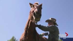 Desperate hunt to reunite surviving horse of Alberta crash with owners