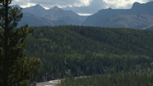 Logging the Ghost: Trees tell weather, climate change stories