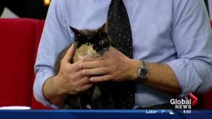 Edmonton Humane Society: Scarlette & Angus