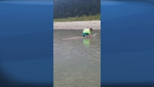 Raw: 9-year-old boy catches huge sturgeon while fishing on the Fraser River