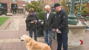 Oakville's race for mayor has gone to the dogs