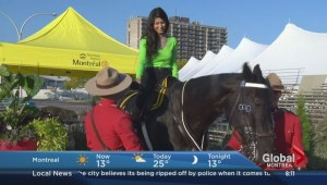 Meet Piper the RCMP horse