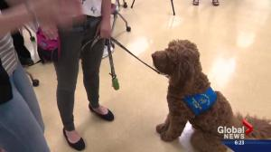 How dogs are helping patients with physical therapy