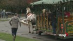 Stanley Park horses spooked by horn