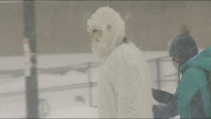 Yeti spotted roaming streets of Boston during blizzard