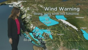 BC Afternoon Weather Forecast: Nov 12