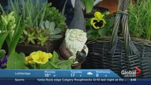 Garden Show Preview – Spring Season