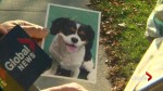 Owner of dog killed after driver allegedly drove into its path speaks out