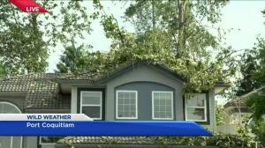 Lightning storm knocks tree onto Port Coquitlam home