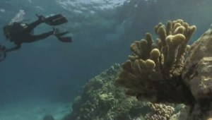 A diver uses a camera to survey a coral reef