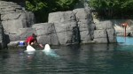Vancouver Park Board votes to ban cetaceans