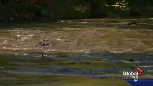 City of Calgary conducts high-flow event on Elbow River