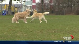 Halifax council Oct. 21: proposed dog park