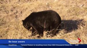 Bear warnings throughout Alberta mountain parks