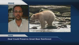 Greenpeace responds to potential Great Bear Rainforest land-use deal