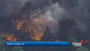 Wildfires raging in Florida
