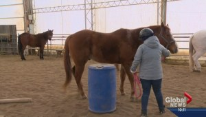 Horses can make difference in addictions therapy