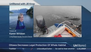 "B.C. humpback whales lose ""threatened"" status"