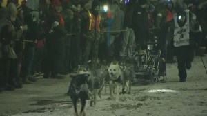 Seavey wins Iditarod race in record time