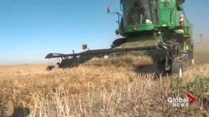 Harvest update in southern Alberta