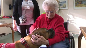 Furry friends lend helping paws to improve the health of hundreds