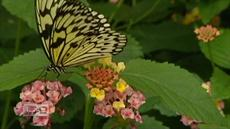 Operation Butterfly: Botanical garden partnership