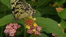 Operation Butterfly: Botanical garden partnership