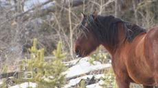 Wild West: Alberta's ugly horse controversy