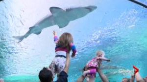 Ripley's Aquarium opening draws crowds