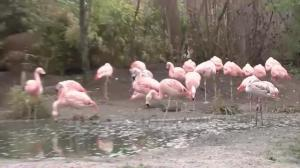 German police on the hunt for flamingo killer