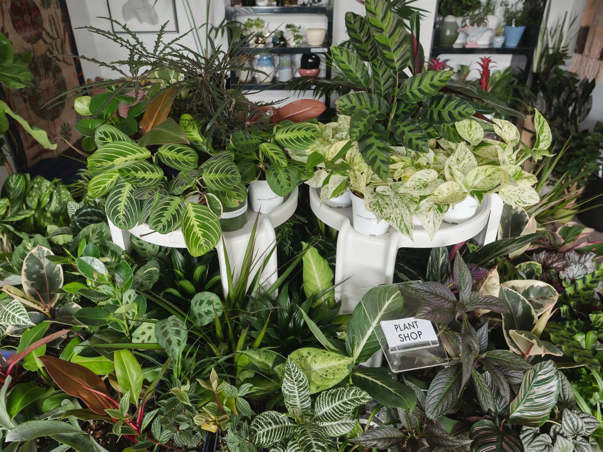 Unusual House Plants For Sale These 7 Awesome Plant Stores Will Help Up Your Interior Design