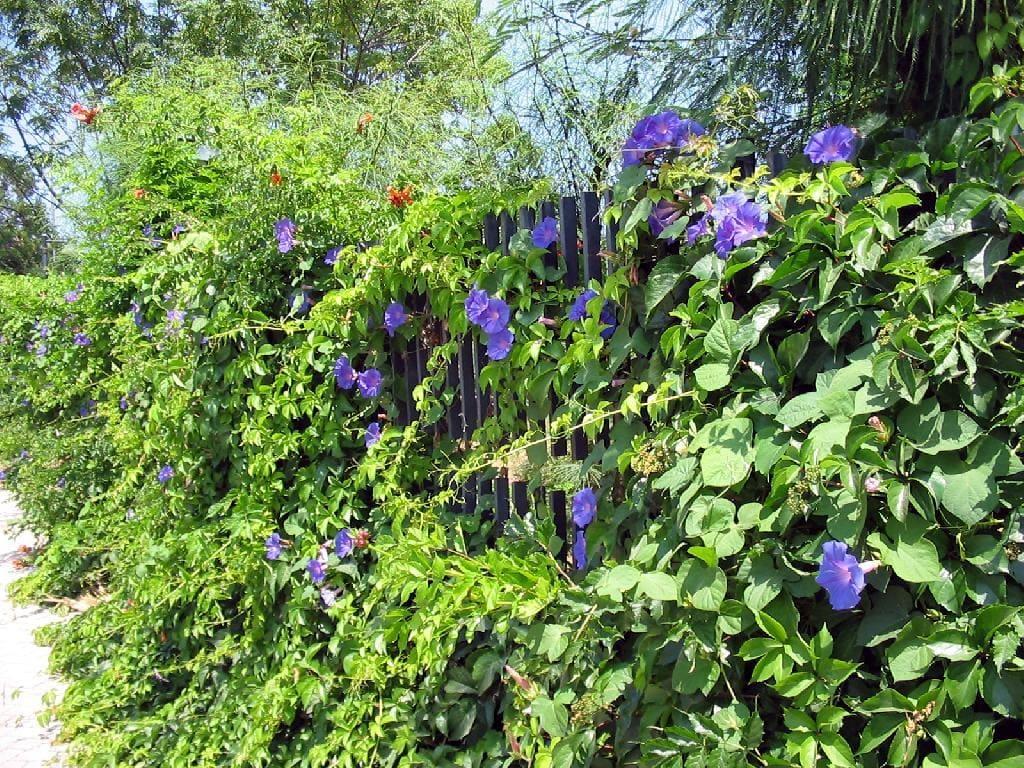 Heckengestaltung Sichtschutz Amar Garten U Landschaftspflege Ag