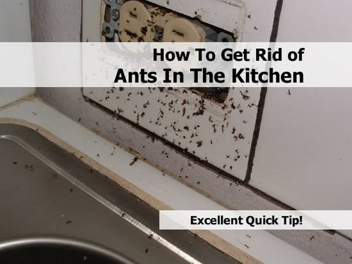 how you get ants how to get rid of them apps directories