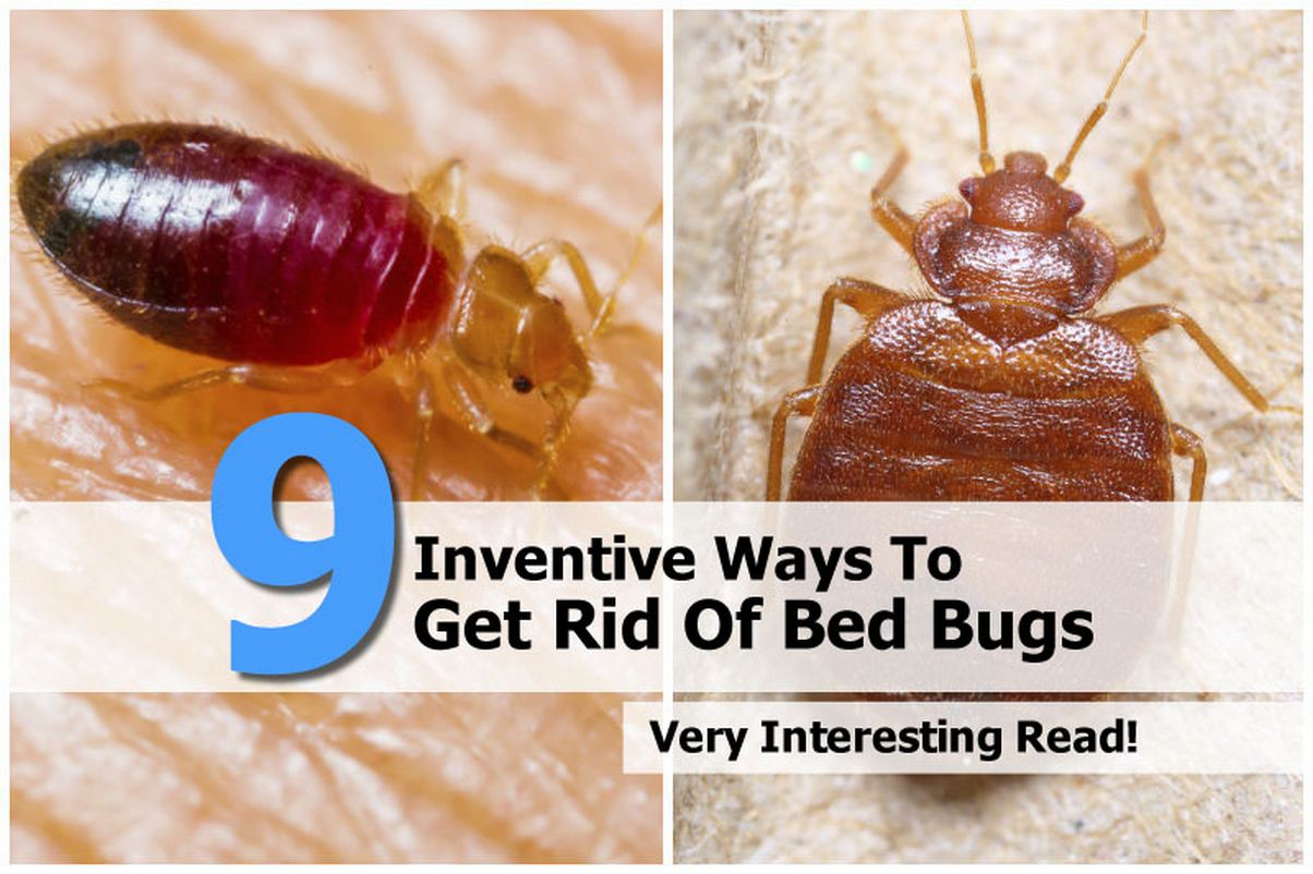 Getting Rid Of Bed Bugs 9 Inventive Ways To Get Rid Of Bed Bugs