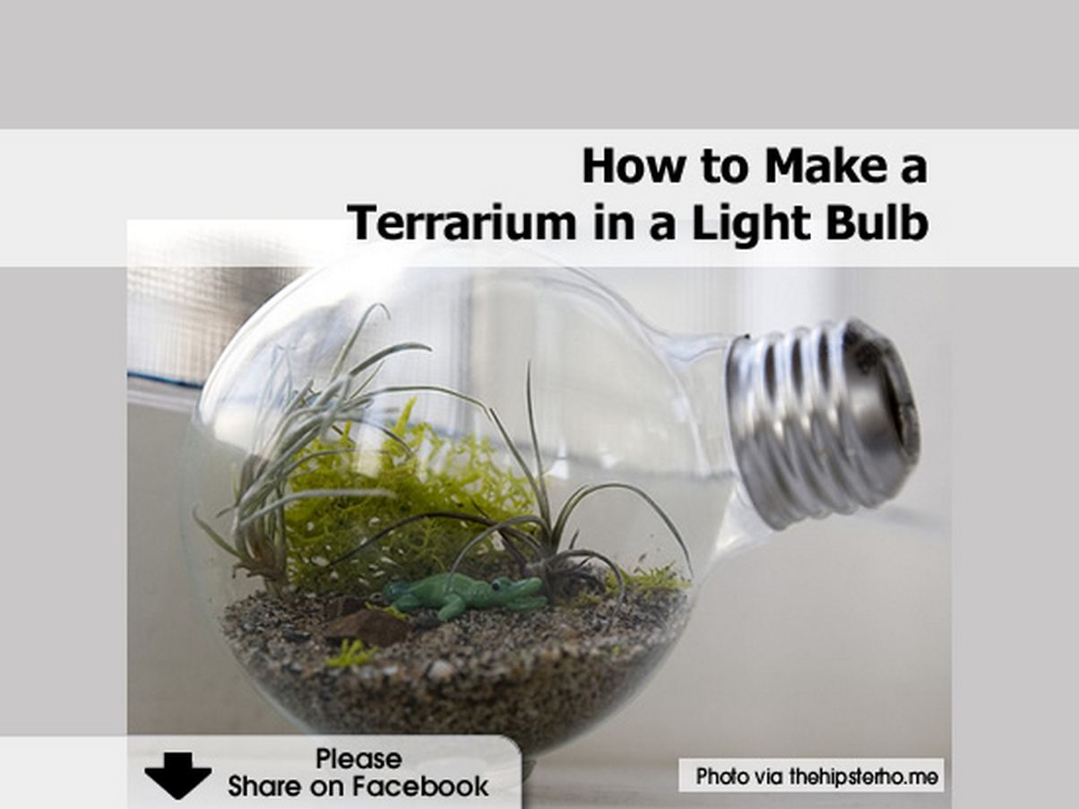 How To Make A Nightlight How To Make A Terrarium In A Light Bulb