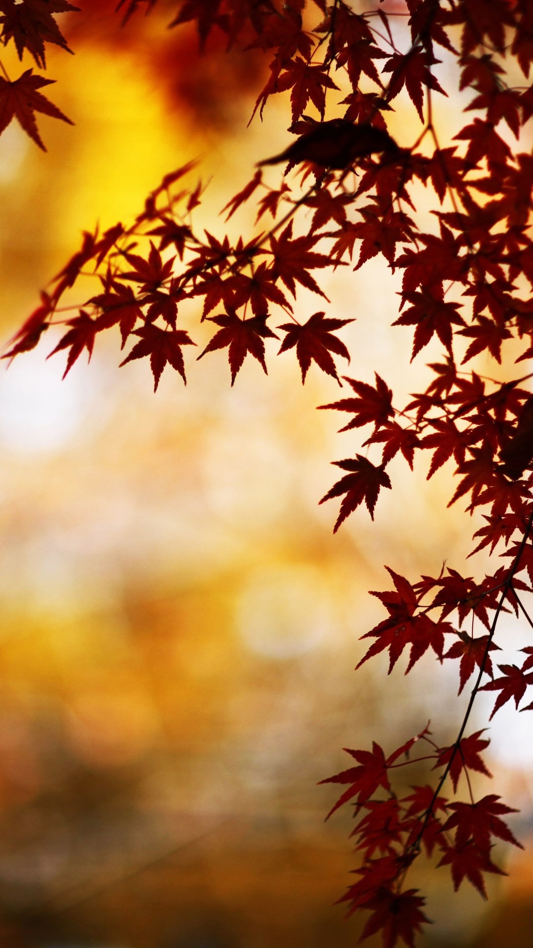 Falling Leaves Wallpaper Screensavers Wallpapers Of The Week Autumn