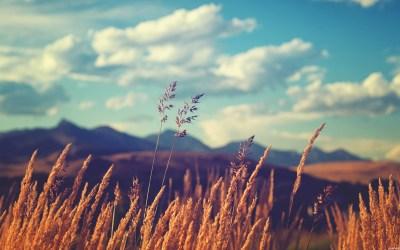 Wallpapers of the week: golden fields