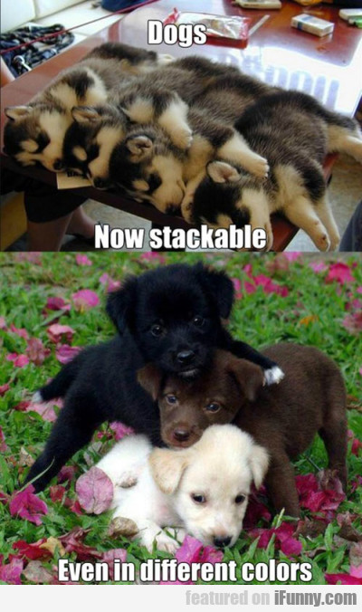 Dogs. Now Stackable. Even In Different Colors.