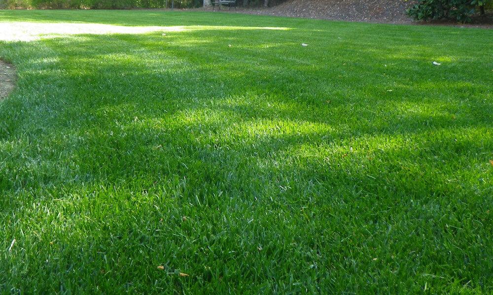 2019 Zoysia Sod Cost Zoysia Grass Sod Prices