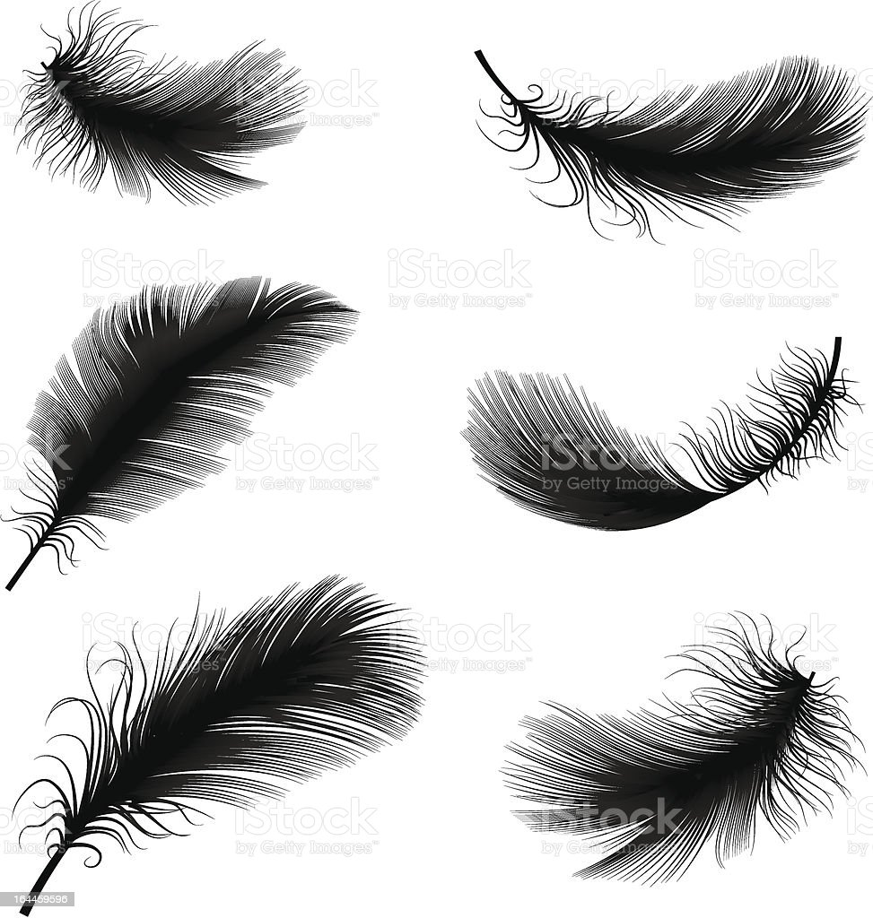 Falling Feathers Wallpaper Black And White Feather Pens Vector Illustration Stock