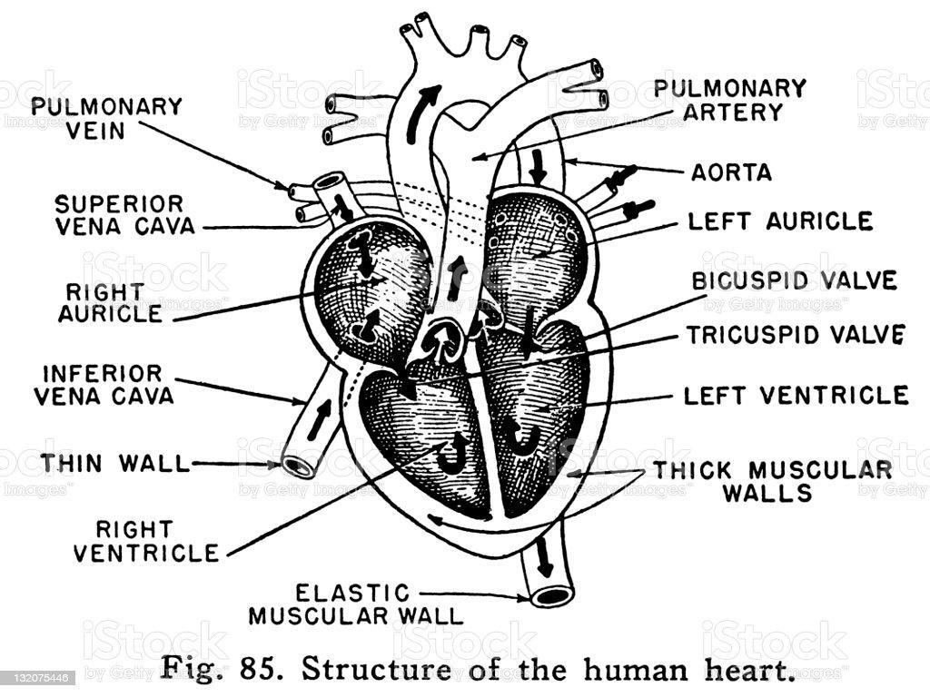 h r diagram lab answers