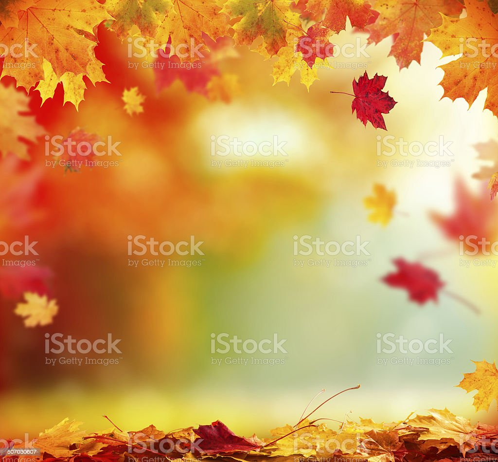Fall Leaves Clip Art Wallpaper Autumn Pictures Images And Stock Photos Istock