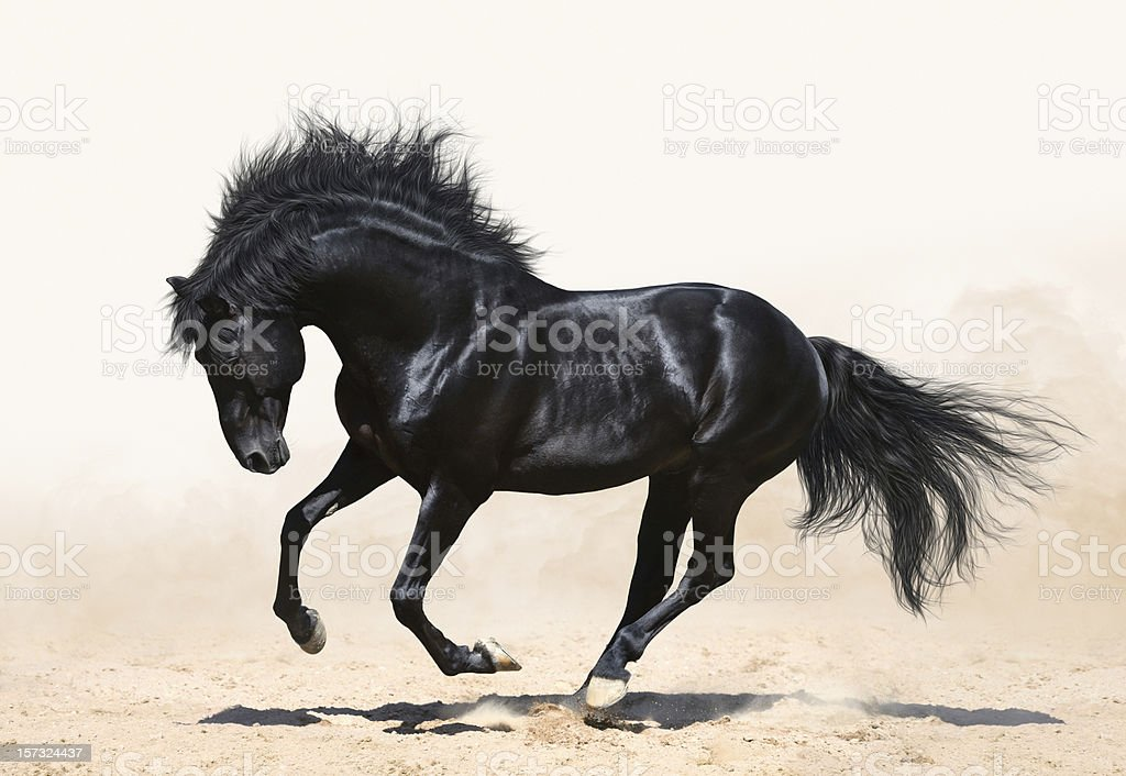 Fototapete Pferde Royalty Free Black Horse Running Pictures, Images And