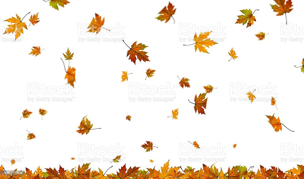 Fall Maple Leaf Tiled Wallpaper Royalty Free Maple Leaf Pictures Images And Stock Photos
