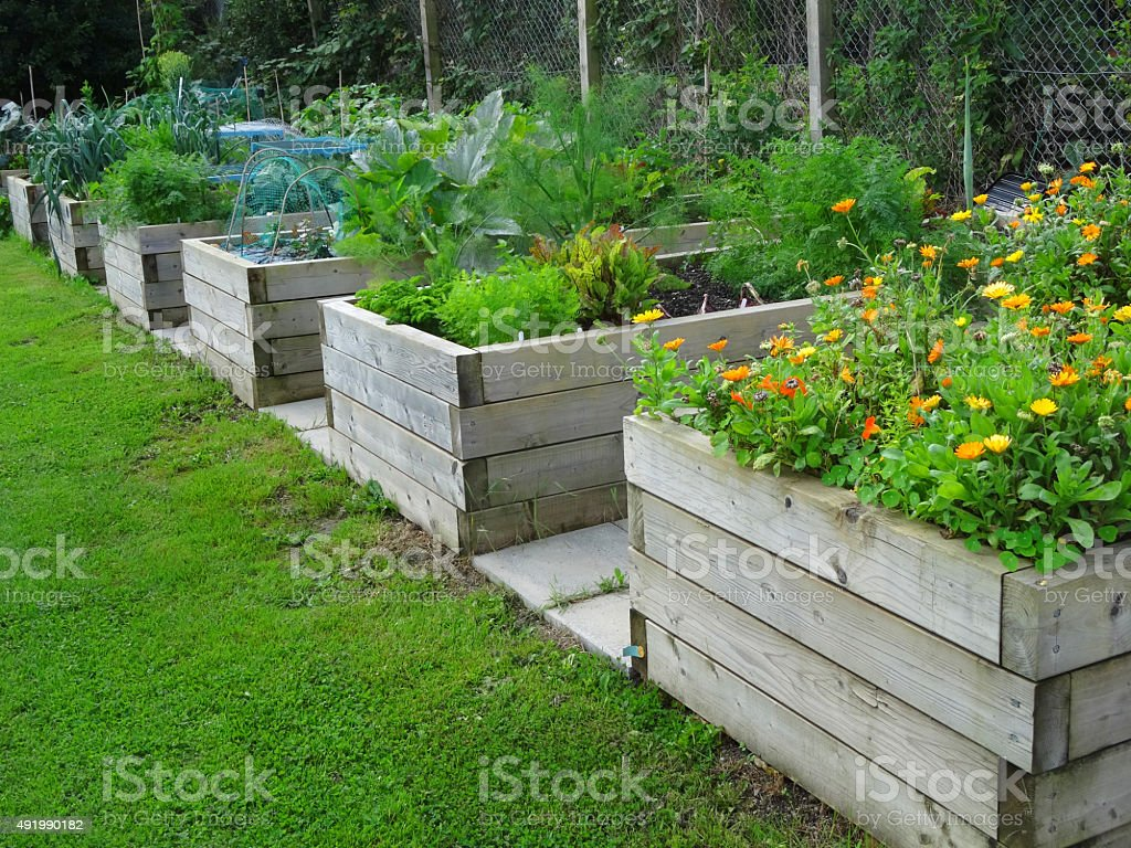 Using Railway Sleepers For Raised Vegetable Beds Image Of Wooden Raised Beds With Marigolds Vegetables Railway