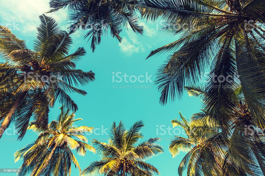 Royalty Free Palm Tree Pictures, Images and Stock Photos - iStock